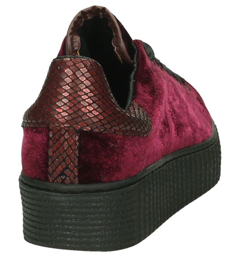 Bordeaux Tango Fluweel Creeper Sneaker in stof (198424)